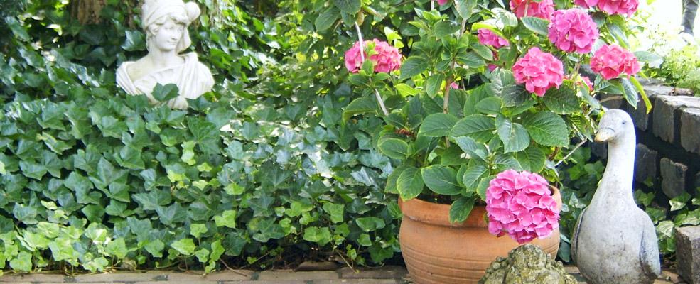 Het palet tuinontwerp kleine tuin - Tuin van de tuin ...